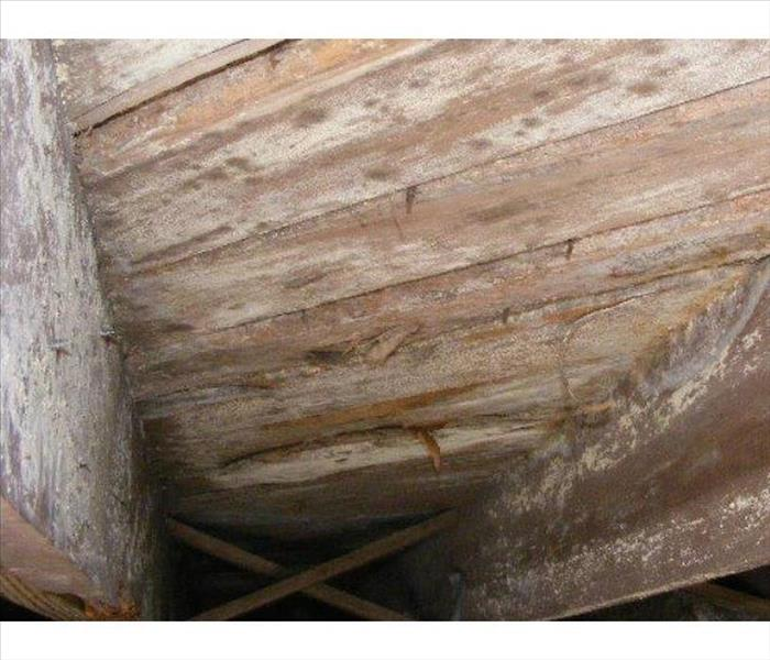 Mold Growth in a Durham Crawl Space