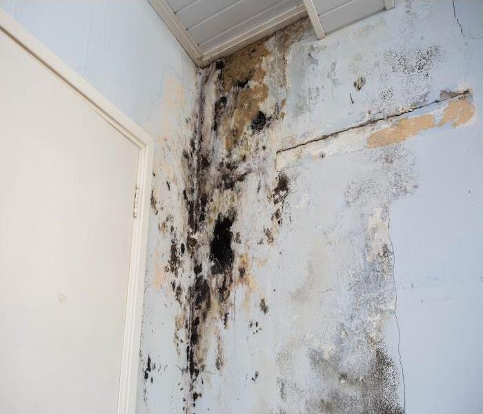 Mold Remediation Call The Experts At SERVPRO To Assist With Removing Mold From Your Home In Durham