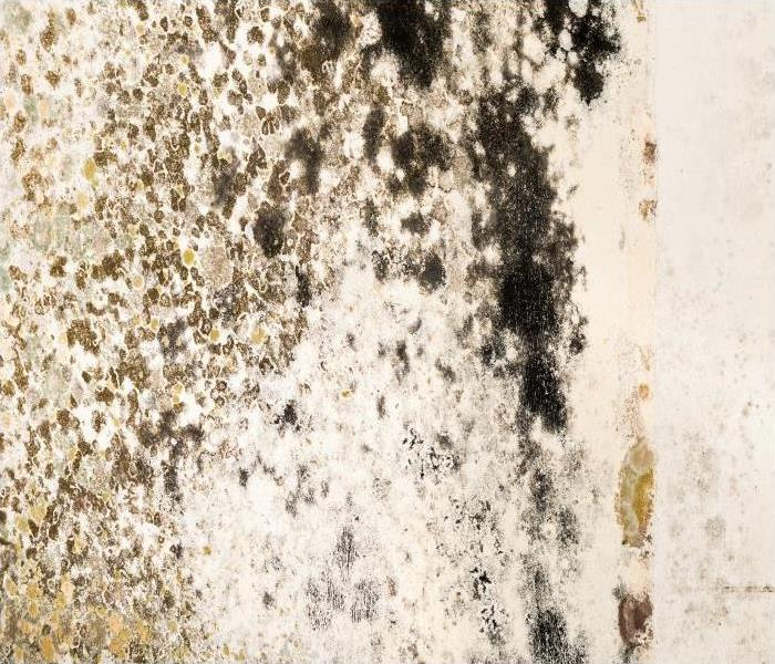 Mold Remediation The Mold Damage That Harms Your Durham Residence
